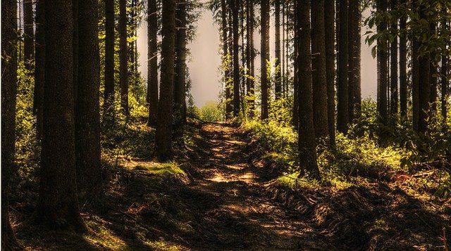 La aventura de caminar sobre la copa de los árboles en Alsacia